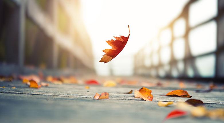 autumn-image-2016